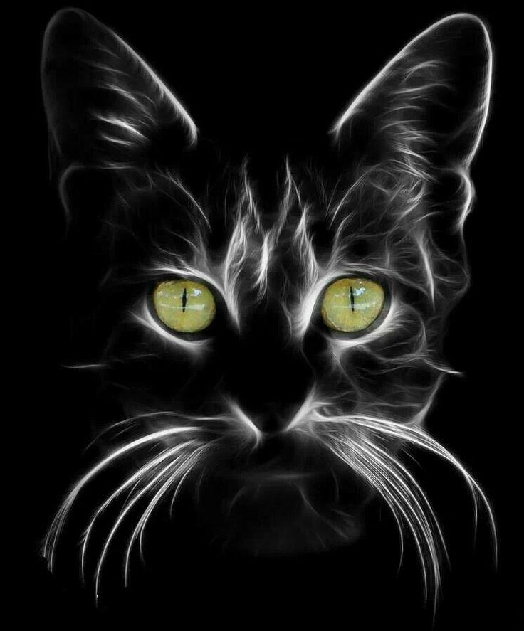 80 besten katzen bilder auf pinterest katzen kunst k tzchen und haustiere. Black Bedroom Furniture Sets. Home Design Ideas