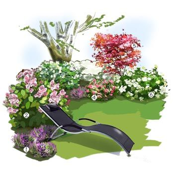 Projet aménagement jardin : Collection d'Hortensia Bruyère cendrée Hortensia à panicules Hortensia de feuilles de Chêne Camélia du Japon Erable du Japon Hortensia de montagne