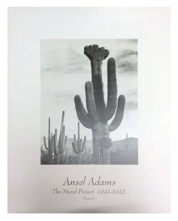 #Ansel #Adams #Saguaro #Desert #Cactus. The Mural Project 1941-1942 #Vintage #Photography #Art #Print #Poster by ILuvBelleArte, $14.99 #western #southwestern #decor #plants #indoor