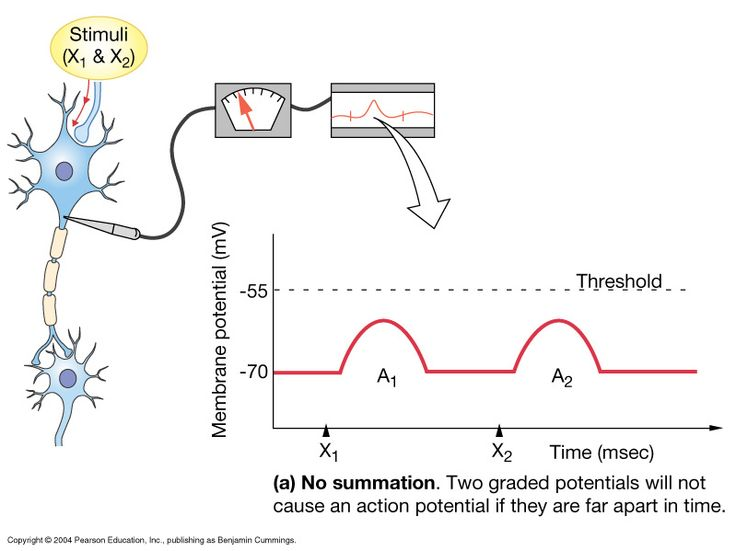 temporal summation and muscle tension Temporal (wave) summation an increase in the frequency with which a muscle is stimulated increases the strength of contraction with rapid stimulation (so rapid that a muscle does not completely relax between successive stimulations), a muscle fiber is re-stimulated while there is still some contractile activity.