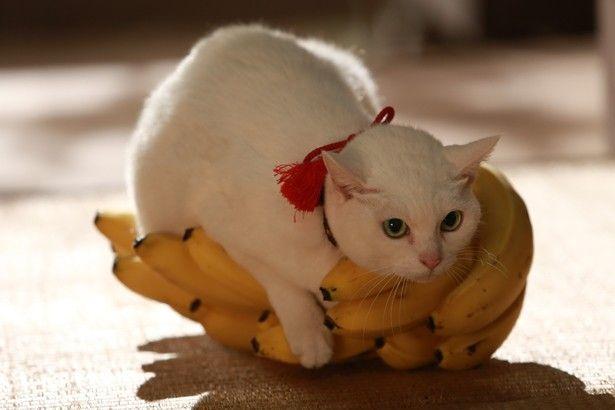 バナナを独り占めしようとする玉之丞
