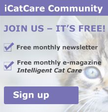 How to introduce a new dog or puppy to your resident cat | International Cat Care