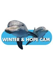 */come and see Winter + Hope  or check up on them on the internet www.seewinter.com and then you can see them on live camera today or anytime  THANKS !!!!!!!!!!