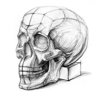 череп экорше академический рисунок: 10 тыс изображений найдено в Яндекс.Картинках