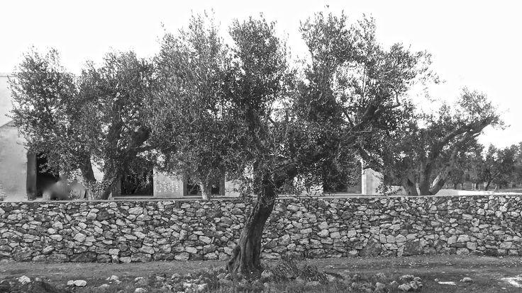 Masseria Fulcignano, Salento, Puglia, Italy