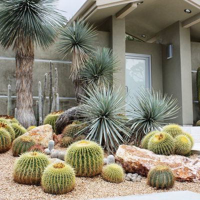 Barrel and columnar cactus, Mexican blue fan palms, and Yucca rostrata