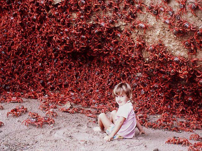 Explore The Beauty Of Caribbean: 25+ Best Ideas About Christmas Island Crabs On Pinterest