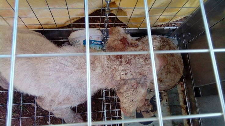 Sick Puppies of Nikiti by AnimalWelfare