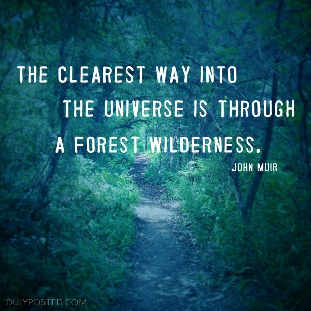 """""""The clearest way into the universe is through a forest wilderness"""" quote by John Muir - Duly Posted"""