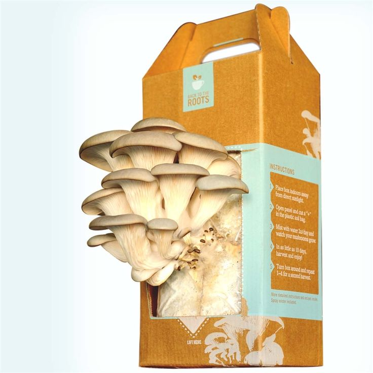 Grow your own mushrooms with Back to the Roots mushroom growing kits.: Gourmet Food, At Home, Mushrooms Gardens, Oysters Mushrooms, Holidays Gifts, Mushrooms Kits, Mushrooms Growing, Products, The Roots