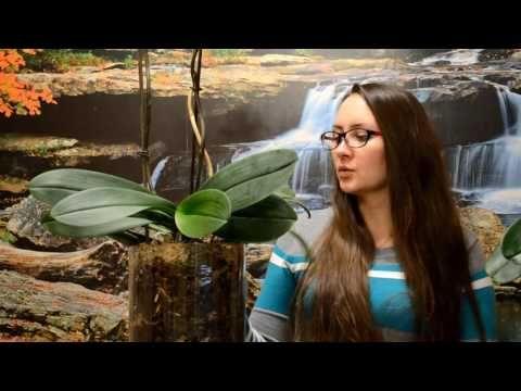 Что стало с моими орхидеями после пересадки?(11.11.16) - YouTube