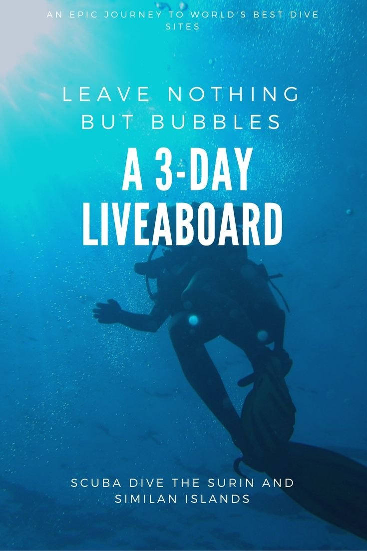 206 Best Images About Scuba Diving On Pinterest  The Bahamas, Whale Sharks  And Underwater