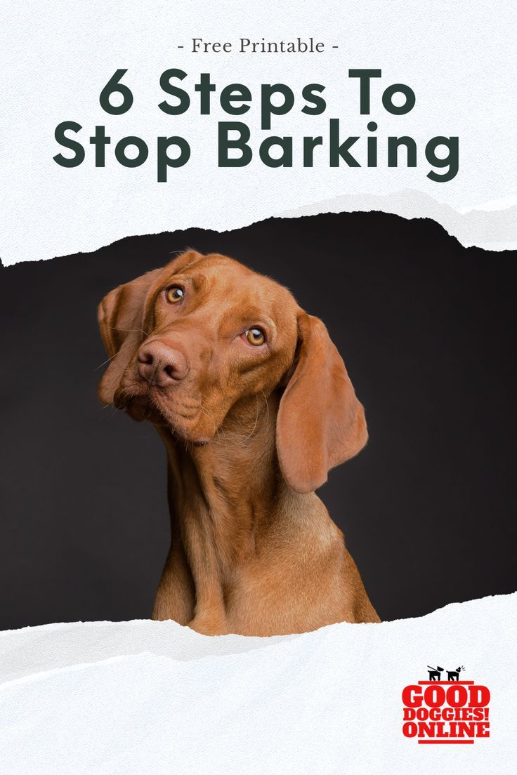 Does Your Dog Bark Excessively Here S How To Stop Dog Barking If