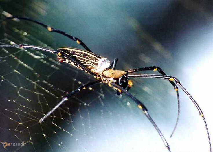 Парк штата Озеро Тавакони – #Соединённые_Штаты_Америки #Техас (#US_TX) Каждую весну парк штата Техас Lake Tawakoni превращается в самые натуральные декорации для фильмов ужасов. Спасибо местным паукам! http://ru.esosedi.org/US/TX/1000131393/park_shtata_ozero_tavakoni/