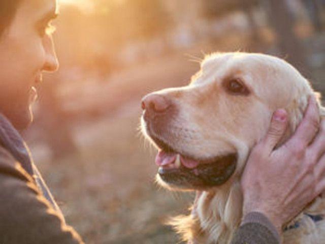 Hund rettet Herrchen vor dem sicheren Tod