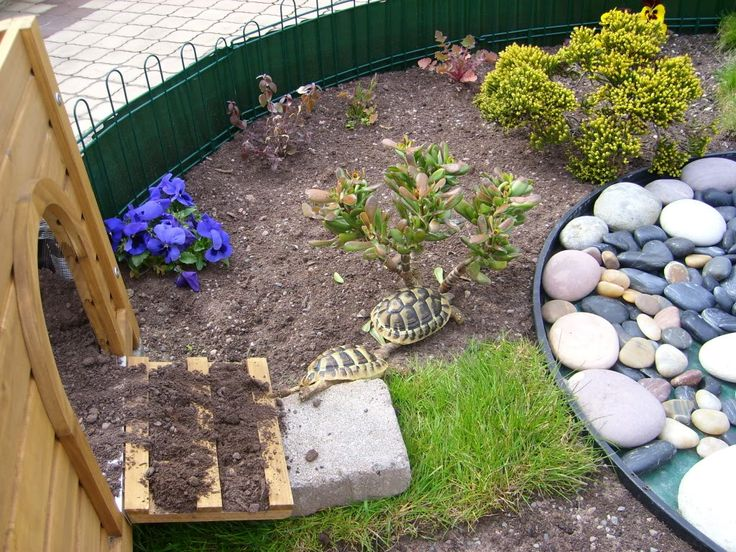 outdoor tortoise enclosure | Herman & Esme's new outdoor enclosure - Tortoise Forum - Tortoise ...