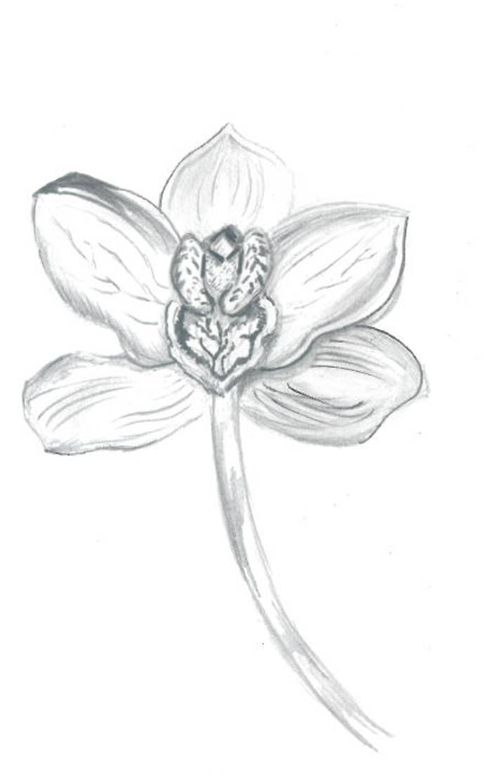 122 best images about Flowers drawings of orchids on ...  122 best images...