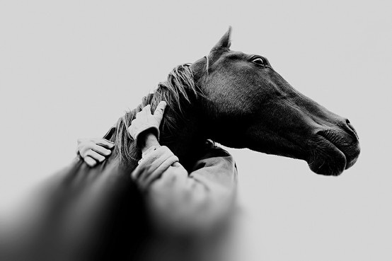 HorsePhotos, Christopher Wilson, Coverage Start, Friends, Horses, Bw Photography, Equestrian, Animal, Wilson Photography