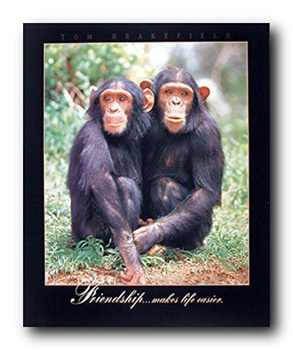 So Cute! This funny cute Chimpanzee wall decor art print poster is not only ideal for livening up any space in your home or office but it is also for providing charming visual interest on wall surfaces. It would be a great addition for your kid's room which will bring cozy, charming touch. This poster will give the walls a unique character and new texture. Ensures quality and color accuracy.