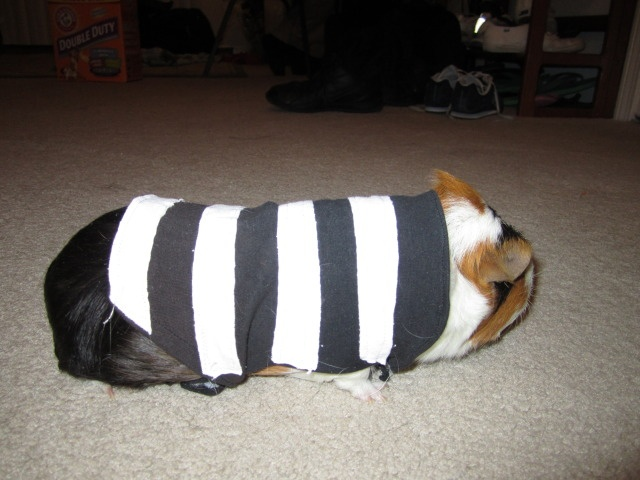 DIY Guinea Pig Jailer Costume.  Use yellow cloth instead of white, and it easily turns into a bumble bee costume =)!