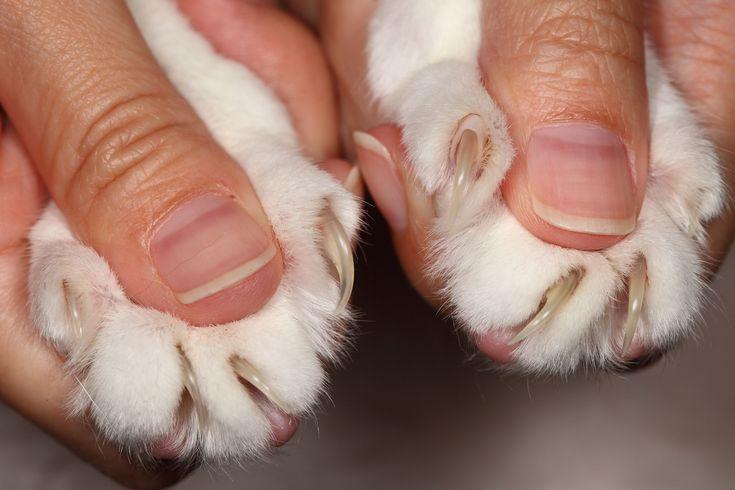Le unghie dei nostri #gatti possono essere un problema per l'arredamento della nostra casa. Perché i gatti amano graffiare? Come e perché tagliare le unghie al micio.