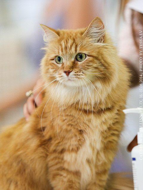 oliver cat movie
