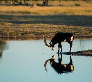 Reflecting on his future    Hwange National Park, Zimbabwe  © Mike Myers #Africa  #Safari  #Zimbabwe