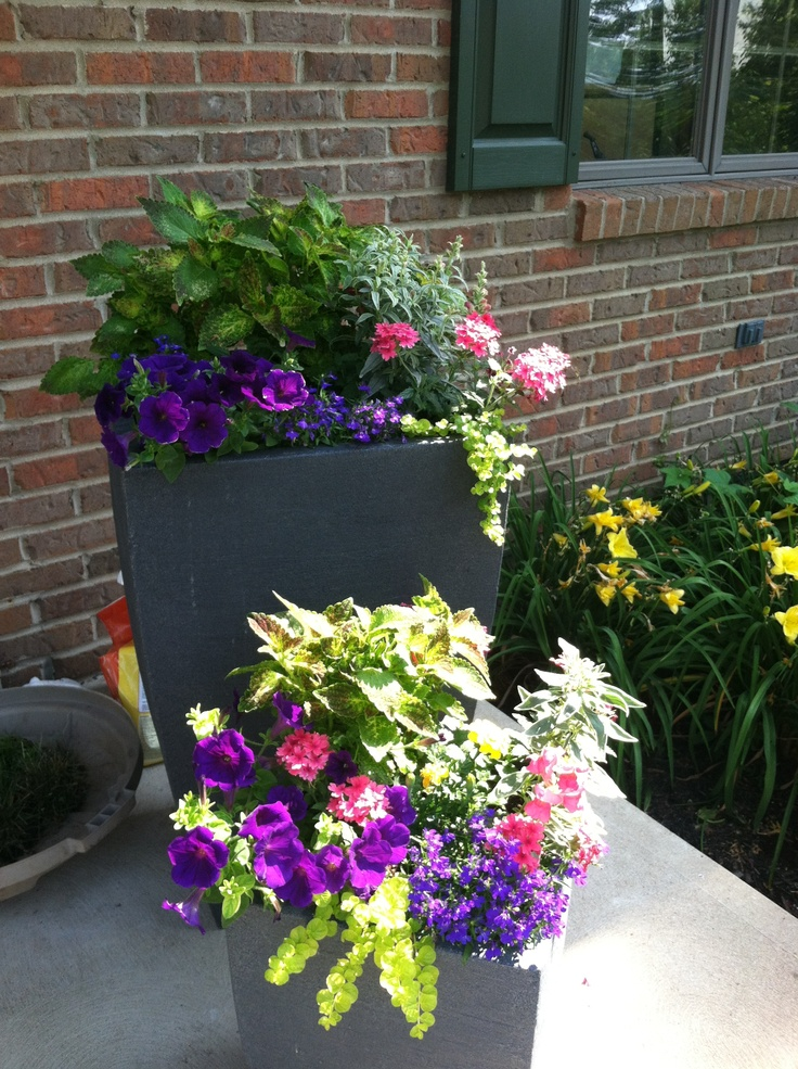 17 Best Images About Front Porch Planters On Pinterest
