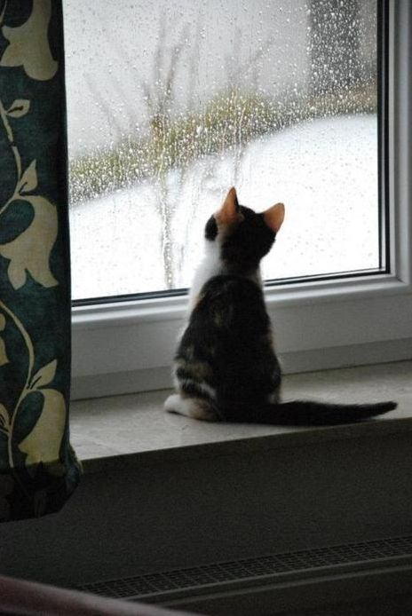 Cat watching the snow.  My cat Muffin did this once when she and Matty were with me at Tahoe . . . but Matty hid in a drawer (The sky is falling!)