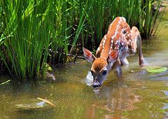 Shaw Nature Reserve. Just outside of St. Louis. Need to get there more. Beautiful! And look! Bambi lives there too.