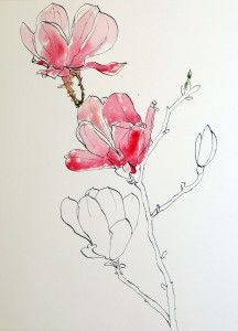 Start watercolor wash for pink magnolias pen ink and wash painting