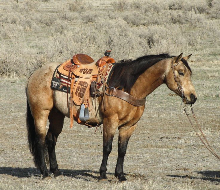 buckskins are so pretty                                                                                                                                                                                 More