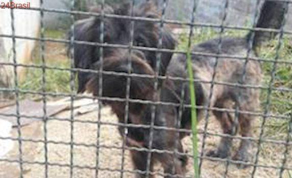 Cadela é abandonada à própria sorte em terreno baldio em Pirituba
