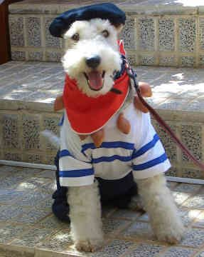 Bonjour!Paris, Puppies, Dogs, Fox Terriers, Halloween Costumes, Wire Foxes Terriers, Wirehaired Foxes, Wire Hair Foxes Terriers, Animal