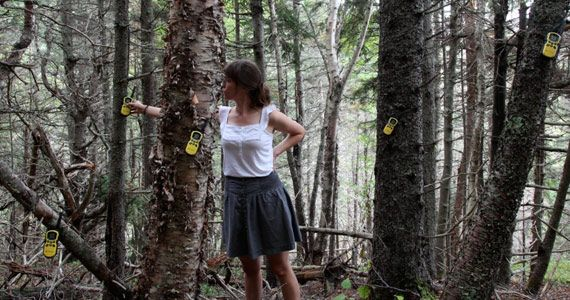 D'Arcy Wilson's Re:Focus Sustainable Art residency explores the wilderness, our relationship with the wild unknowable and attempts a delicate balance with nature.