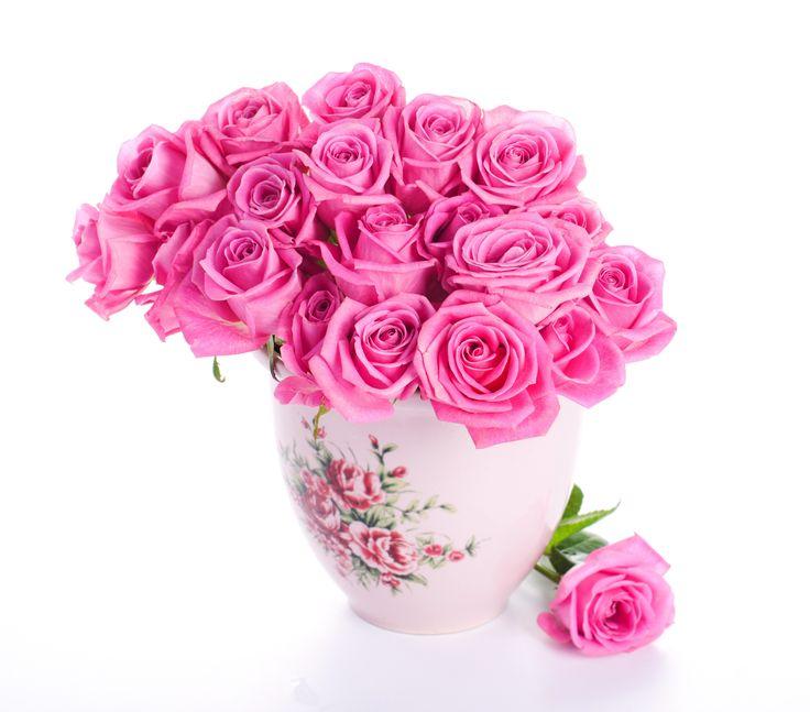 Rose Rose Wallpapers Red Rose Wallpapers White Rose