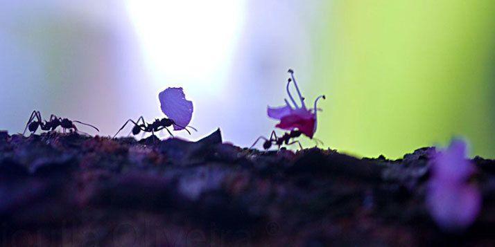 In het voorjaar gaan mieren graag op pad, helaas vaak op plekken waar je ze liever niet hebt, zoals in je keuken... Dit kun je doen tegen mieren in huis!