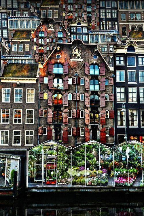 Amsterdam - The Flower Market. Going there in less than two weeks!! :D