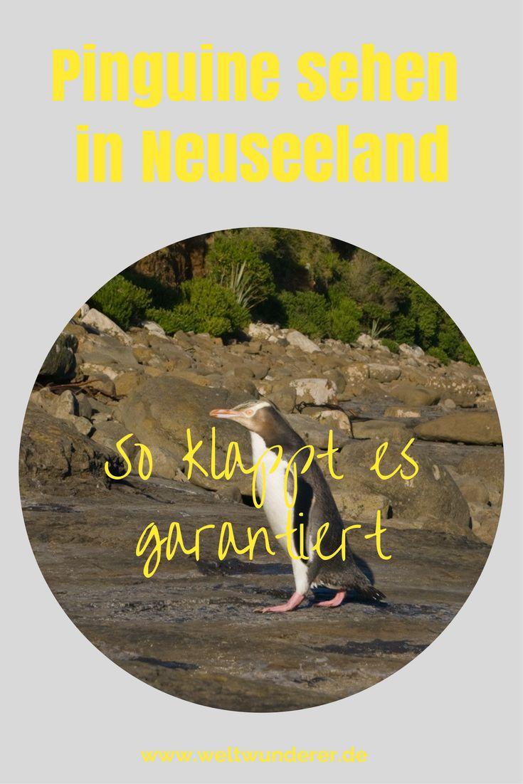 Pinguine kann man in Neuseeland in freier Natur beobachten. Wir haben die besten Spots und die wichtigsten Tipps für euer Wildlife Watching in Neuseeland!