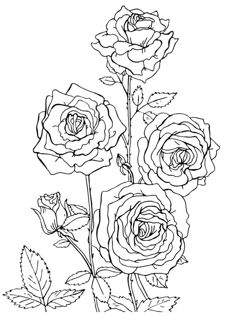 Картинки цветов красивые для печати карандашом
