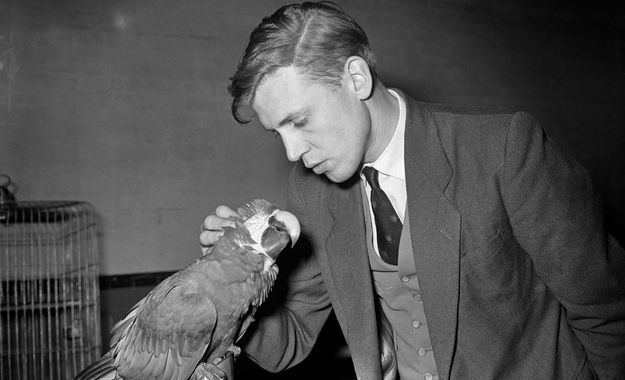 Sir David Attenborough in his prime was such a hot slice of man. Plus, look at him loving on this macaw!