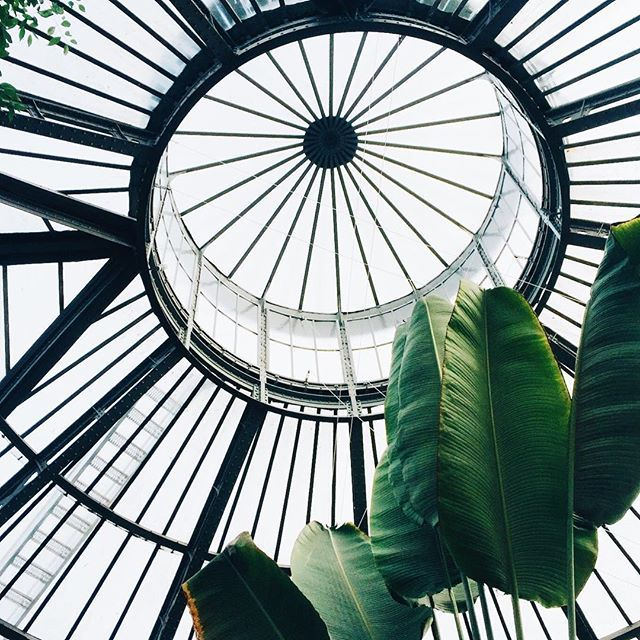 Another one from the Hortus Botanicus. Such a magical place.⠀