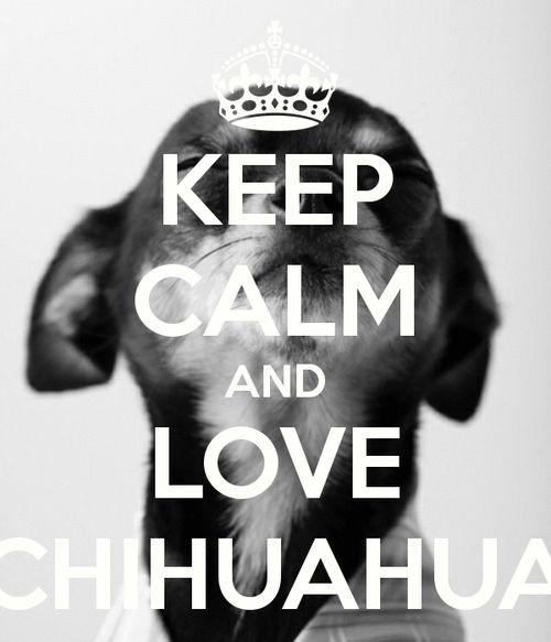 chihuahua love - Google Search