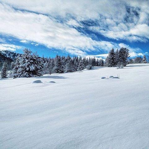 L'oro bianco del Monte Bondone, by @giuliofalcone #instatrentino