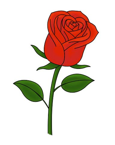 rose draw easy drawing drawings flower simple ways learn