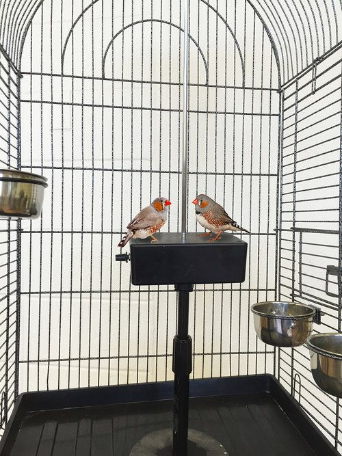While Contemplating Their Fate in the Stars, the Twins Surround the Enemy, Installation with two finches, cage and theremin, 2003