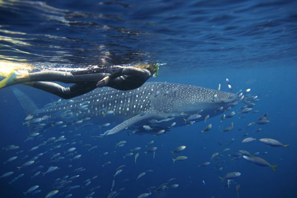 Photo find on the Coral Coast of Australia. Exmouth and Coral Bay, extra special events happen here every year. Swim with Whale Sharks on the Ningaloo Reef.  http://www.australiascoralcoast.com
