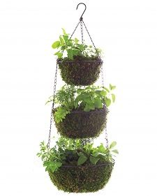 Hanging Herb Garden - Use hanging mesh fruit baskets filled with moss and potting soil.   Great herb garden for your backyard!   Works perfect for small space gardens.