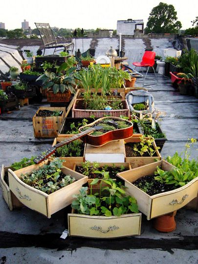 rooftop garden with old dresser drawers as planting boxes