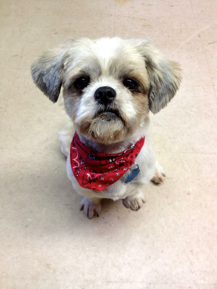Adopt A Dog Dallas Ft Worth